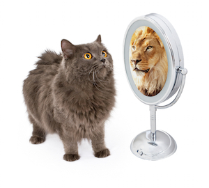 kitty looking in mirror